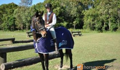 Vienna Akima on HorseYard.com.au