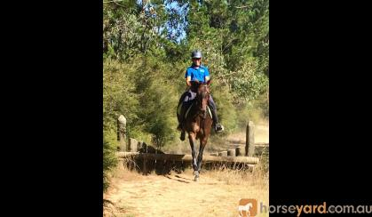 Talented, athletic mare on HorseYard.com.au