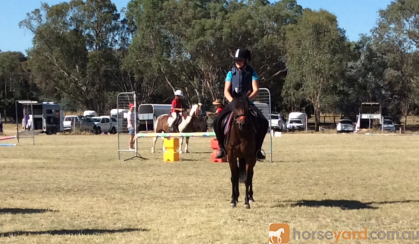 Gorgeous natured mare on HorseYard.com.au