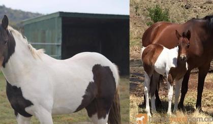 Jaxson on HorseYard.com.au