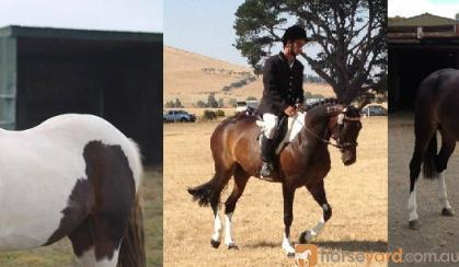 Billy on HorseYard.com.au