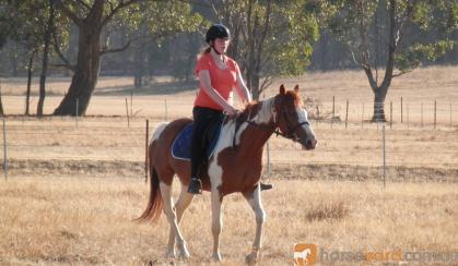 Your New Best Friend - Exceptional Gelding on HorseYard.com.au