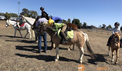 Buckskin Tobiano pony mare  on HorseYard.com.au