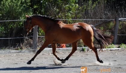 Your Next Grandnational Star on HorseYard.com.au