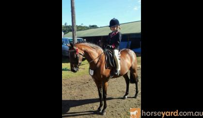 Rhyl Mimosa - Riding Pony broodmare on HorseYard.com.au
