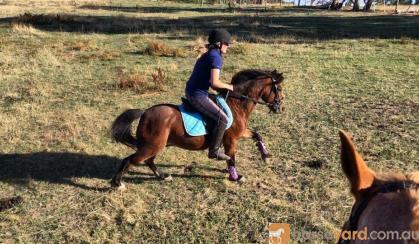 Project pony  on HorseYard.com.au