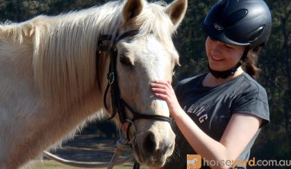 Super Quiet Palomino Gelding + VIDEO++ on HorseYard.com.au