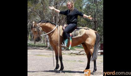 Pretty Buckskin QH Gelding +VIDEO++ on HorseYard.com.au