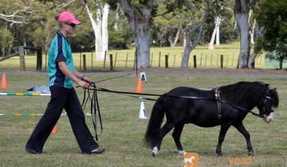 5yo gelding on HorseYard.com.au