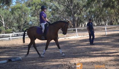 Sanlirra Flashlight on HorseYard.com.au