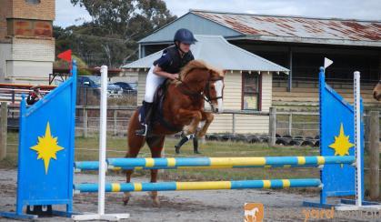 Troy on HorseYard.com.au