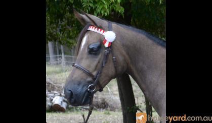 JLB Love Lace on HorseYard.com.au