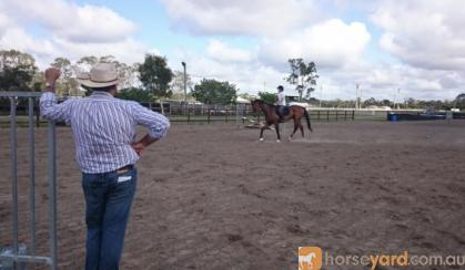 Bay TB Showjumper on HorseYard.com.au