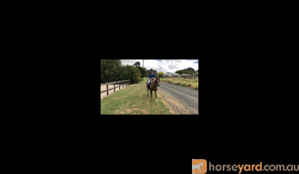 For sale  on HorseYard.com.au