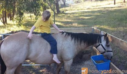 Buckskin Quarter Horse on HorseYard.com.au