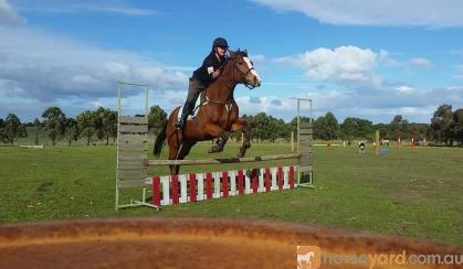 Protential plus OTT mount  on HorseYard.com.au