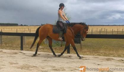 Skye,  15.3h,  9 yr old mare on HorseYard.com.au