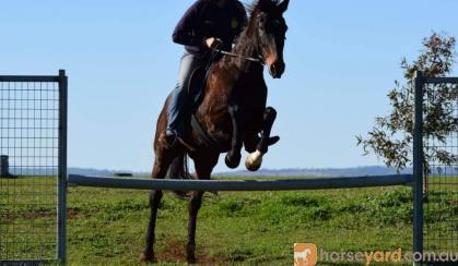Fun Allrounder  on HorseYard.com.au