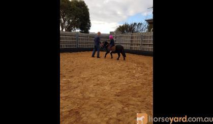 Beginners pony  on HorseYard.com.au