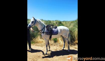 Cherokee on HorseYard.com.au