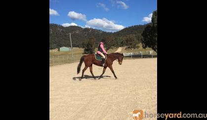 Gentle and smart mare  on HorseYard.com.au