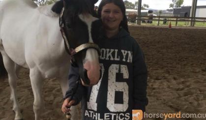 PHAA registered gelding on HorseYard.com.au