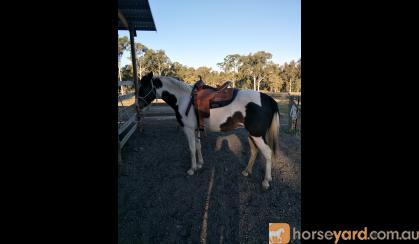 Beautiful Willing Mare  on HorseYard.com.au