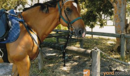 ME OL CHINA 0414 934 227 on HorseYard.com.au