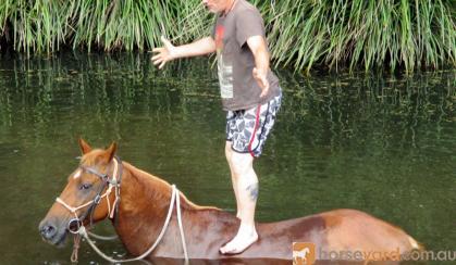 Quiet Sorrell Purebed QH Mare + VIDEO+ on HorseYard.com.au