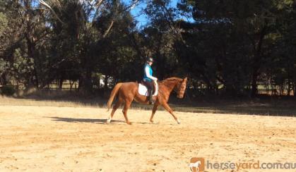 HONEST ALLROUNDER on HorseYard.com.au