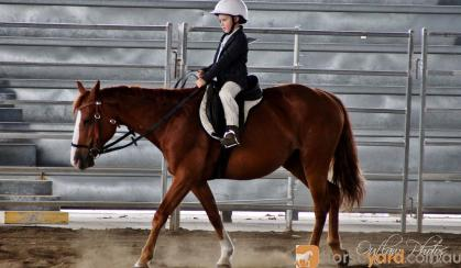 Beautiful Chestnut QH Mare on HorseYard.com.au