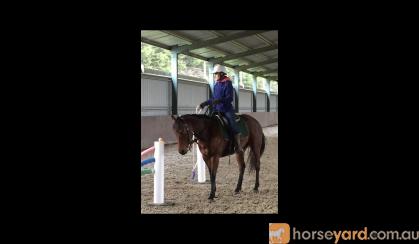 Versatile All Rounder on HorseYard.com.au