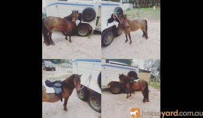 Sweet pony on HorseYard.com.au