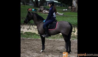Multi supreme winner  on HorseYard.com.au