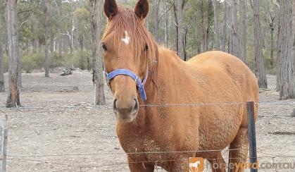 Beautiful Boy Flash on HorseYard.com.au