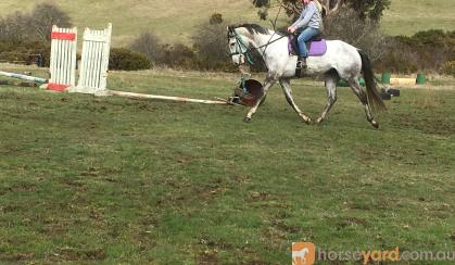 **Upcoming eventer** on HorseYard.com.au