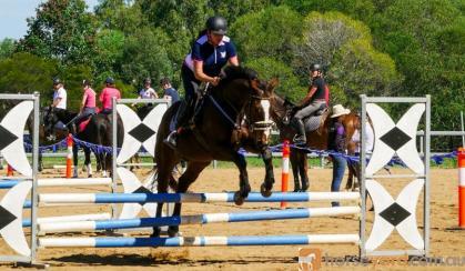 Bright bay gelding 16.1hh rising 7 on HorseYard.com.au