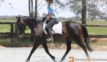 Lovely quiet project mare on HorseYard.com.au