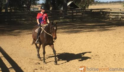 Lovely TB suit Dressage on HorseYard.com.au