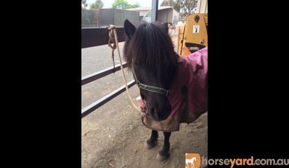 10-11 hh Mare on HorseYard.com.au