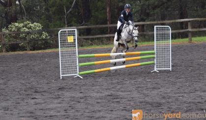 Lakevale Toy Dancer- Ultimate Allrounder pony on HorseYard.com.au
