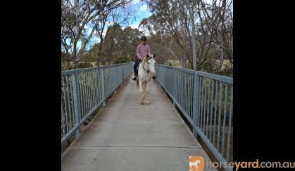 Fairytale horse on HorseYard.com.au