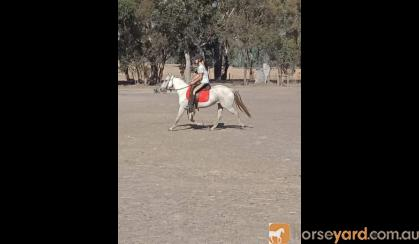 Family Pony  on HorseYard.com.au