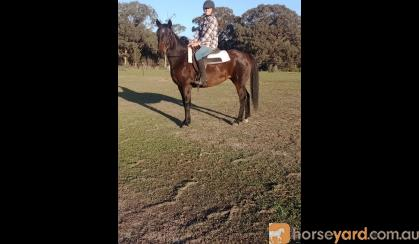 Bombproof Mare  on HorseYard.com.au