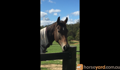 Quality young horse on HorseYard.com.au