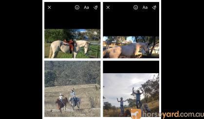 Allrounder  on HorseYard.com.au
