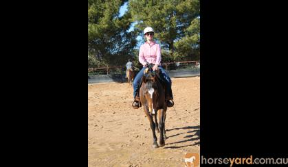 Quiet QH Gelding  on HorseYard.com.au