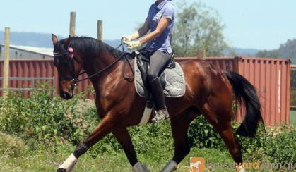 Super moving mare on HorseYard.com.au