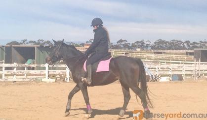 STUNNING ARABIAN X WARMBLOOD MARE on HorseYard.com.au