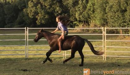 Exceptional Stock Horse on HorseYard.com.au